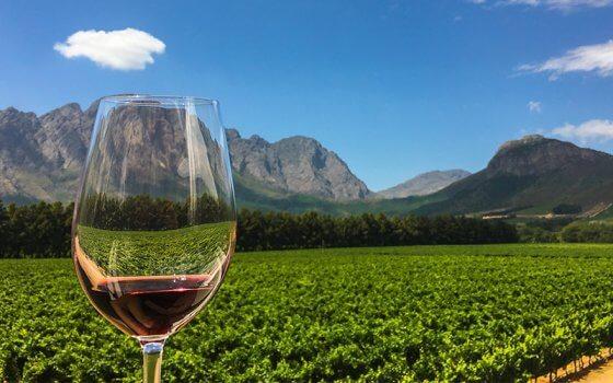 Vinhos na África do Sul